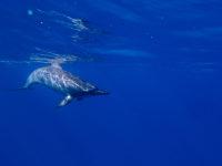 Delfin Begegnungen