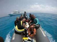 Fahrt zu den Delfinen
