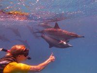 Paarende Delfine