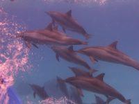 Delfin Familie