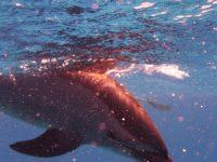 Delfin ganz nah